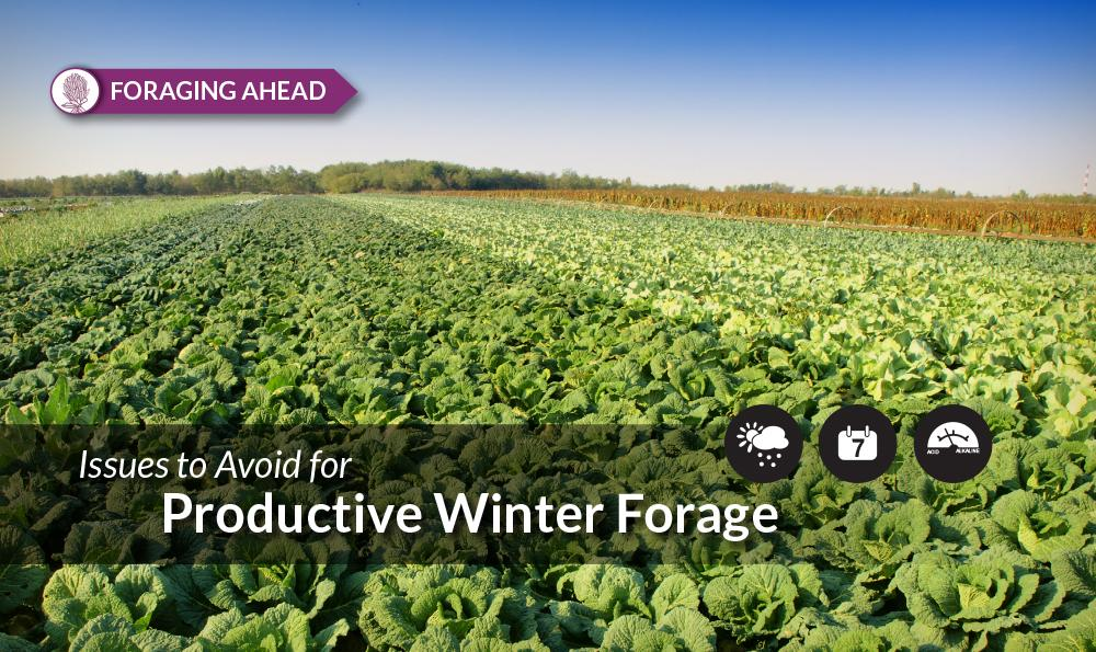 Foraging Ahead with Dr. Don Ball: 9 Reasons Winter Annual Forages See Production Problems