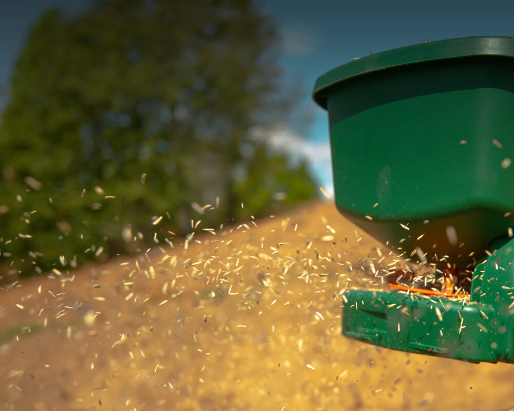 Seeds and Food Plots