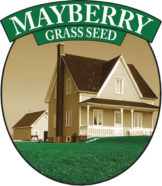 MAYBERRY™ TURF SEED