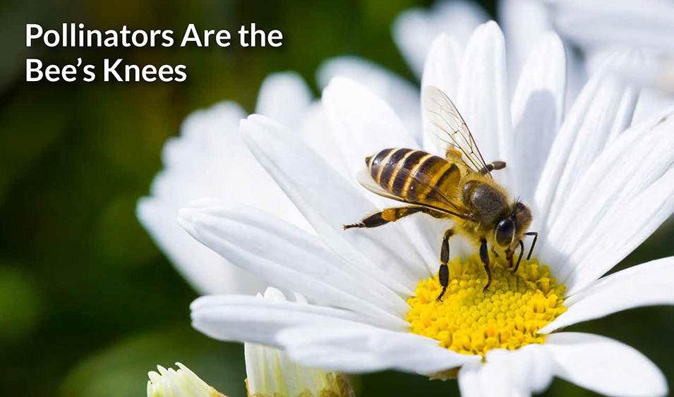 Pollinators are the bee's knees.
