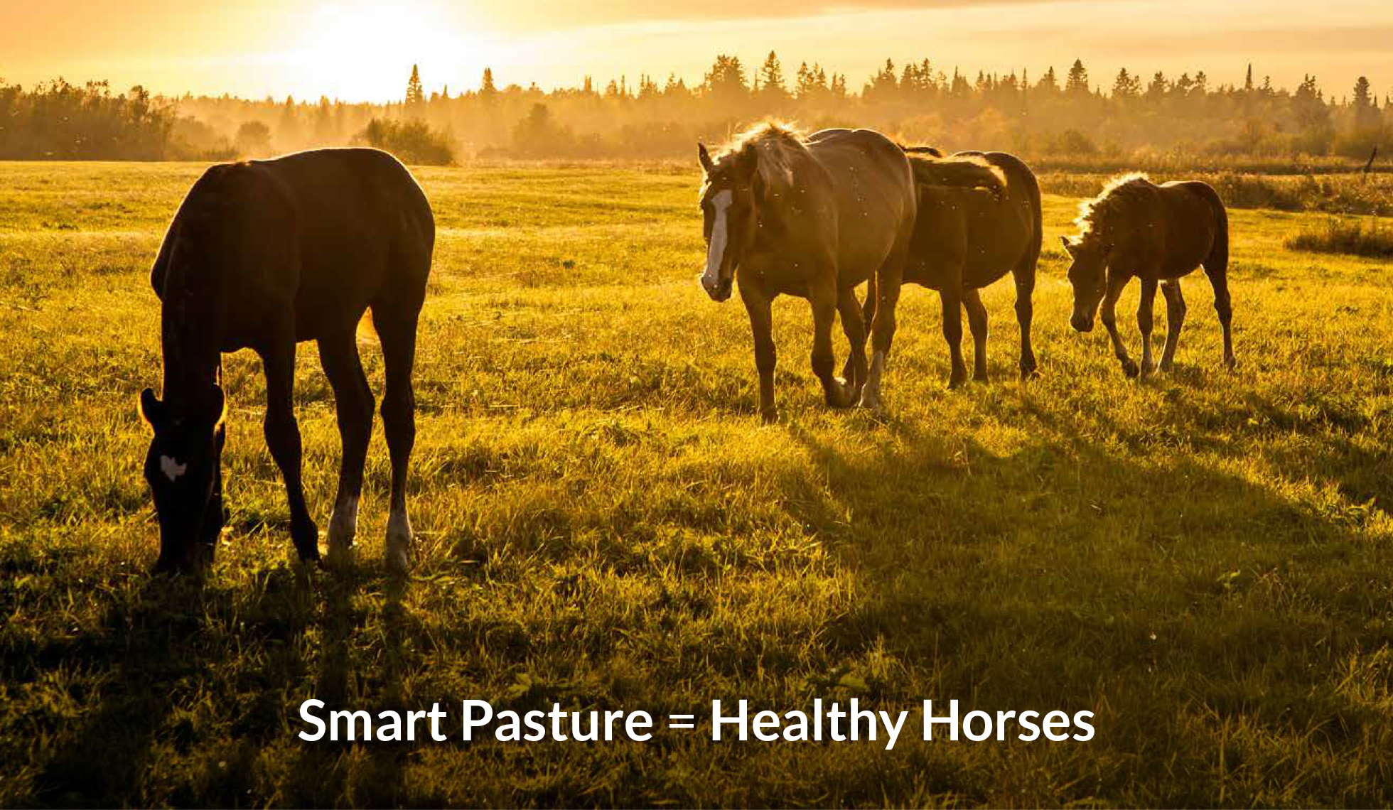 Healthy pastures with Ragan & Massey