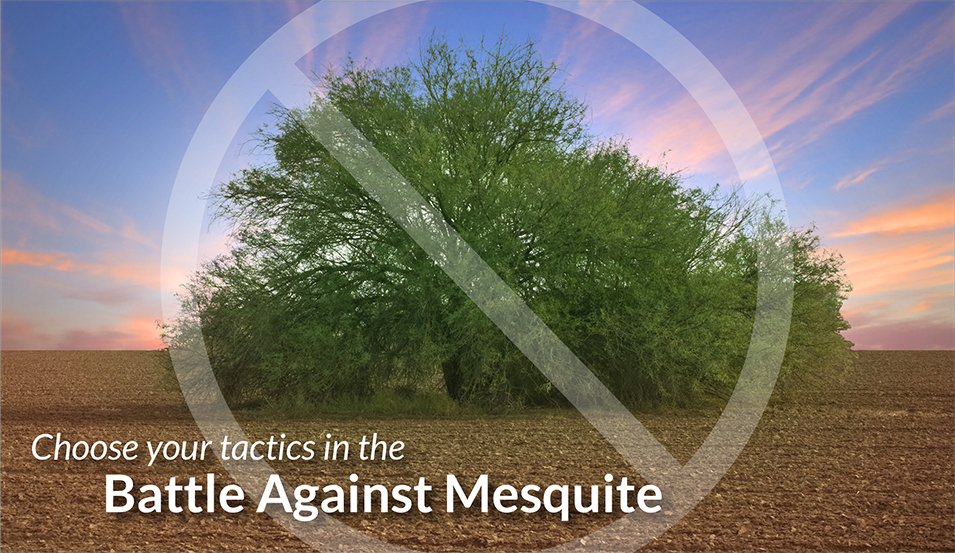 Mesquite Tactics by Ragan & Massey