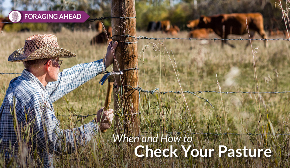 Checking Pastures by Ragan & Massey