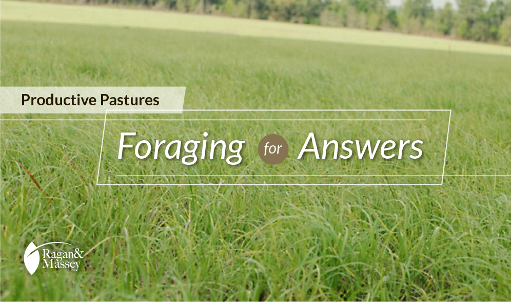 Selecting forage for a productive pasture