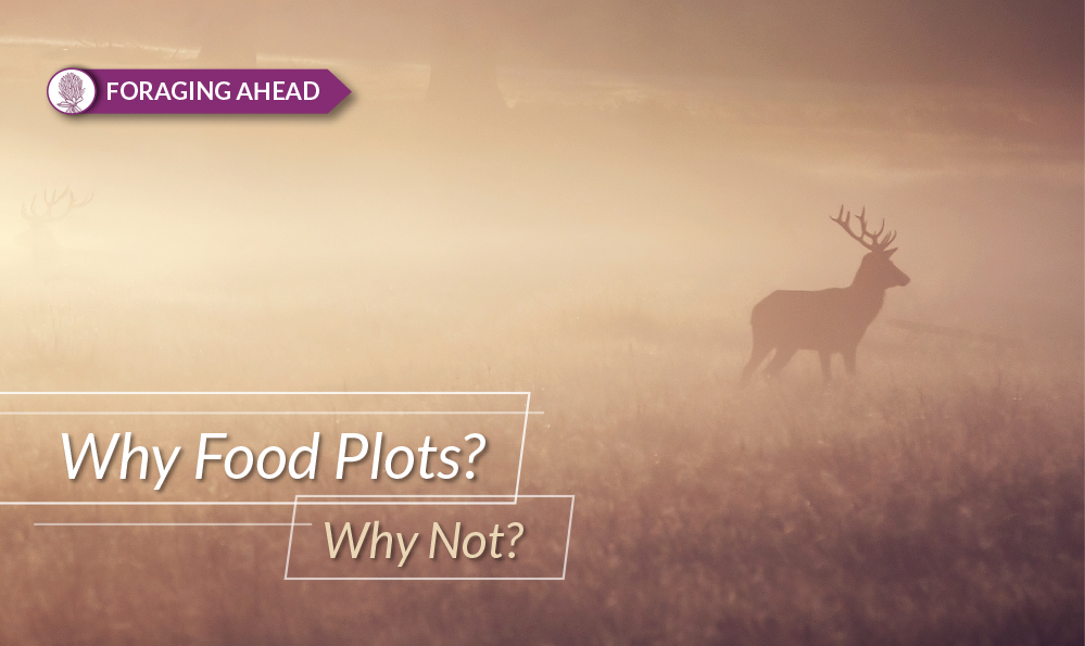 Foraging Ahead: Food plots for wildlife