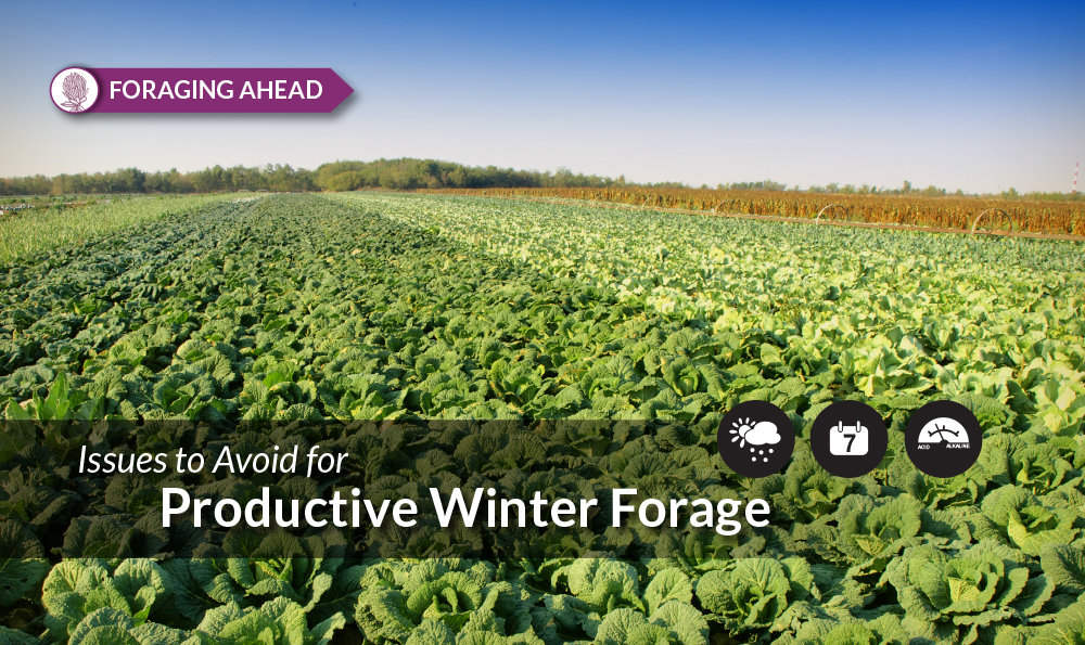 9 Reasons Winter Annual Forages See Production Problems