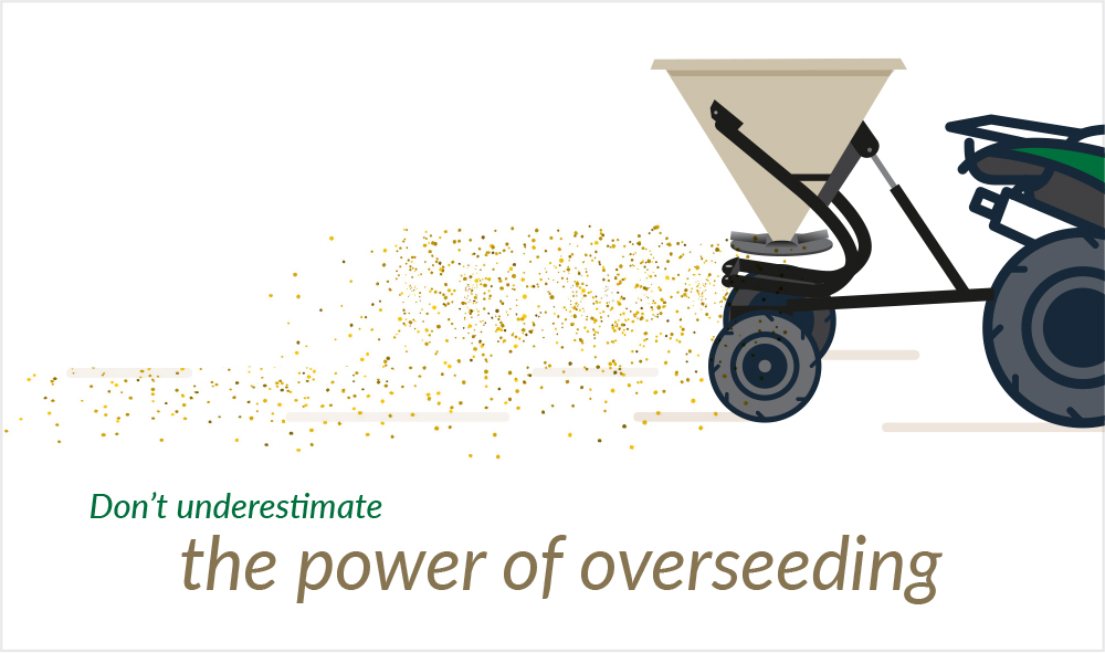 Overseeding winter ryegrass