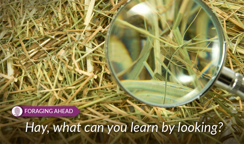 What can we learn with a visual examination of hay?