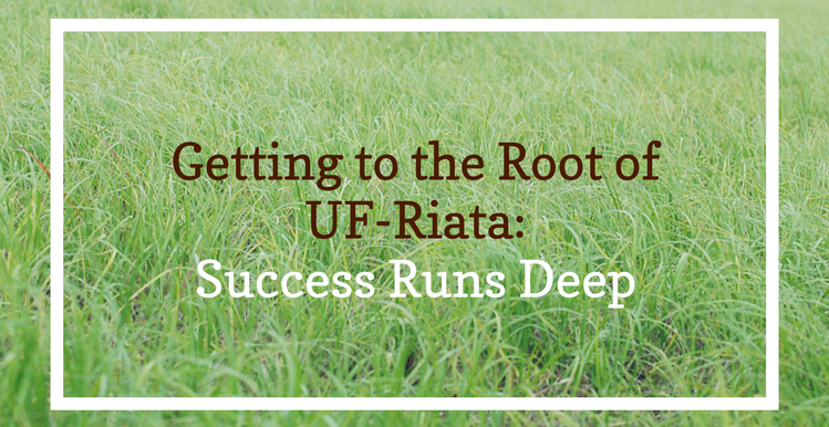 UF Riata Grass Seed